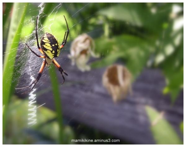 Araignée, Spider