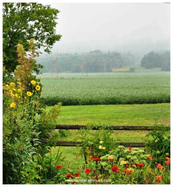 Matin brumeux, foggy morning
