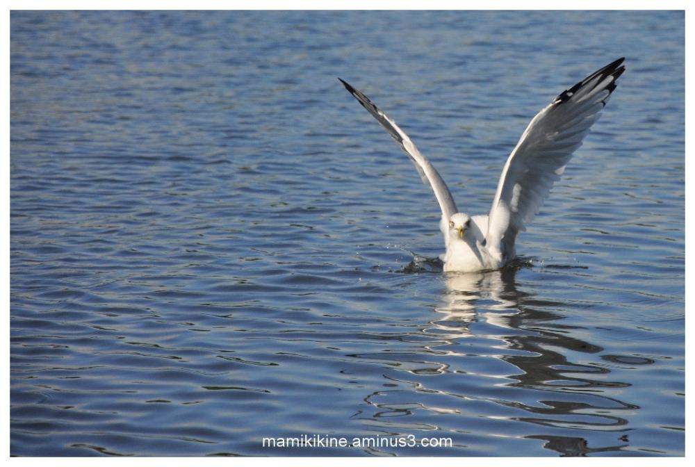 Mouette, seagull