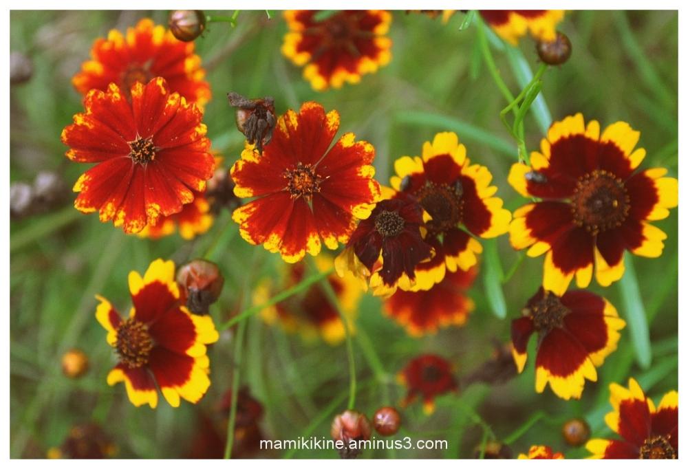 Floraison, Blossom