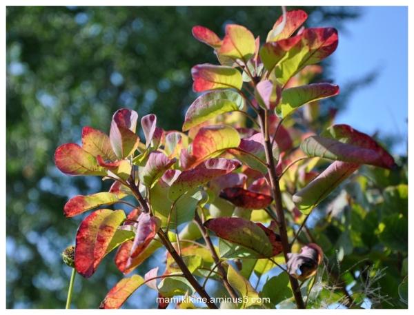 Signes de l'automne, signs of autumn