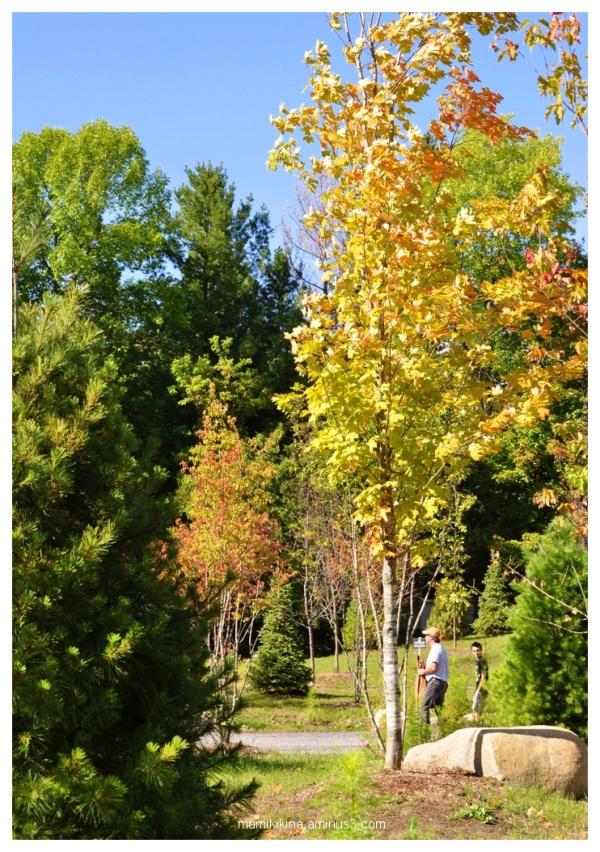 Balade dans un parc, Walk in the park