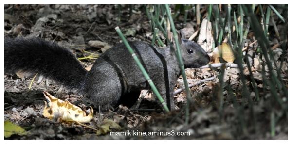 Écureuil, squirrel