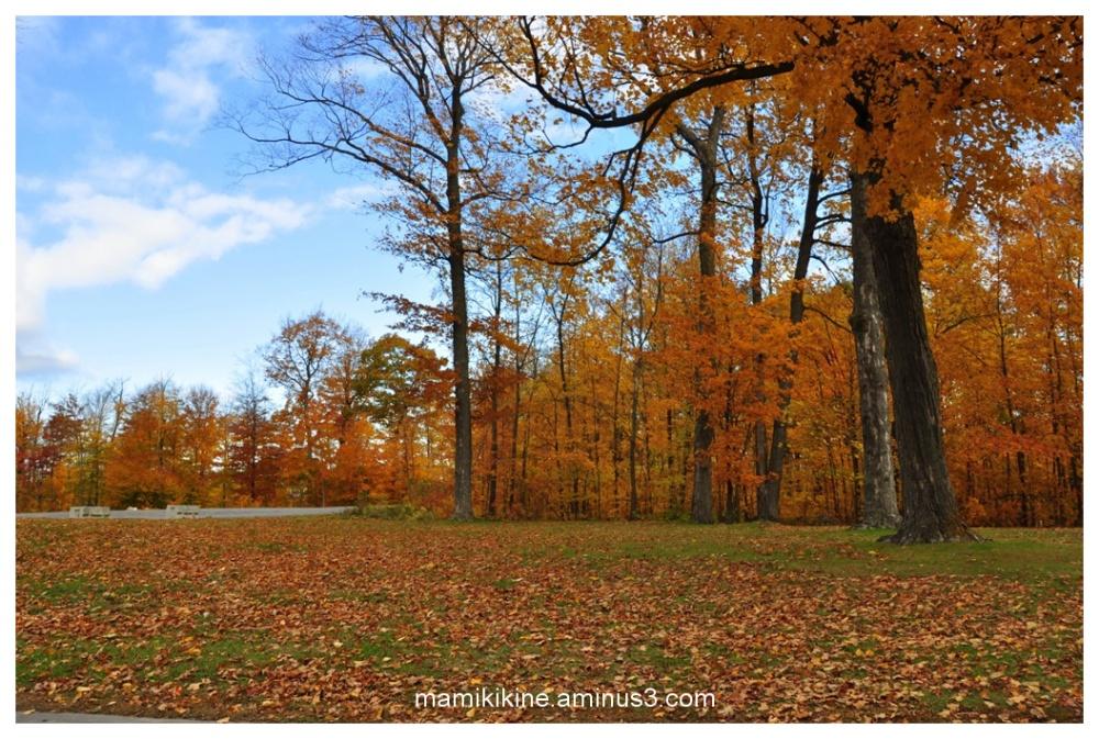 Automne doré, golden autumn