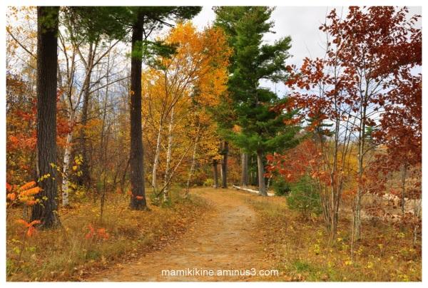 Balade dans la forêt, Walk in the forest
