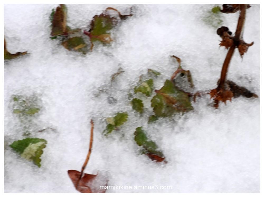 Première neige, first snow