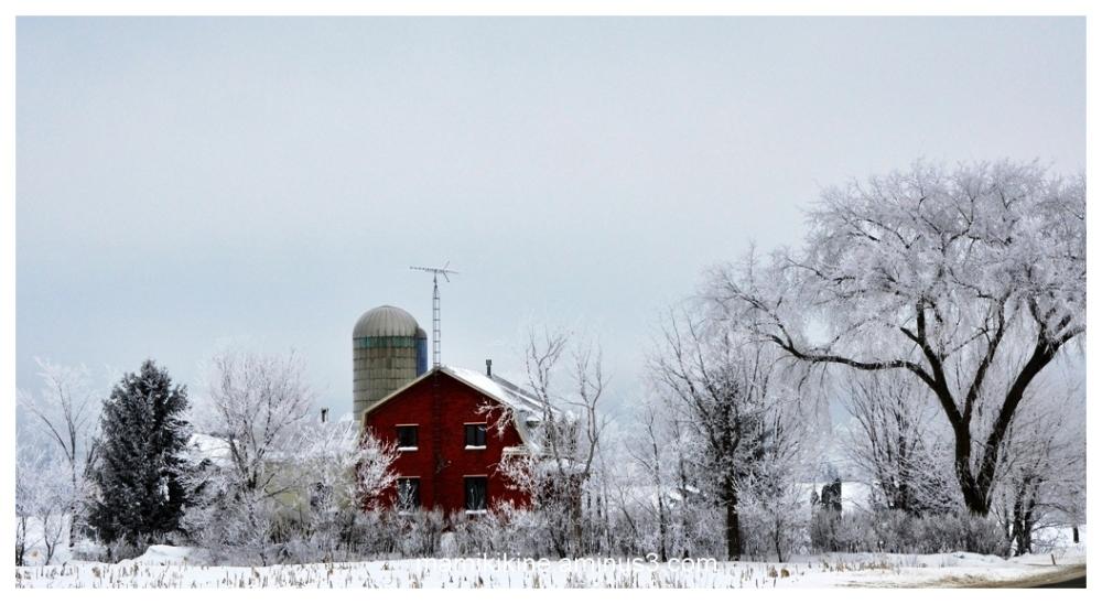 Matinée givrée, frosty morning