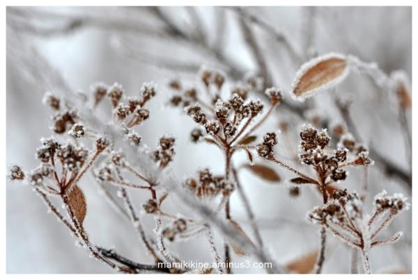 Givrée, frost