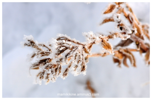 Frimas, Frost