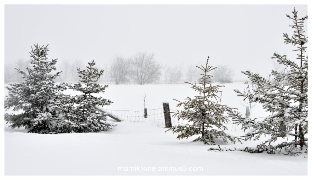 Neige fraîche, fresh snow