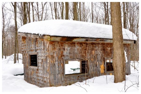 La cabane dans la forêt, The shack in the forest