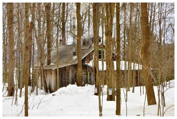 La cabane à sucre, the sugar shack
