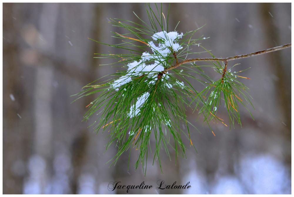 Neige de printemps, spring snow
