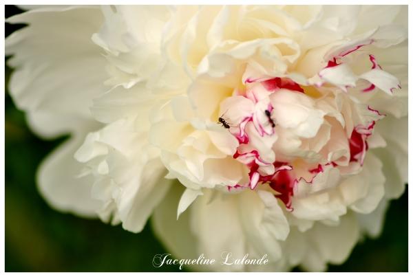 Parfum sublime, sublime fragrance