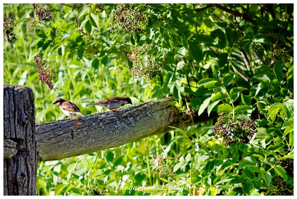 Délice pour oiseaux, delight for birds