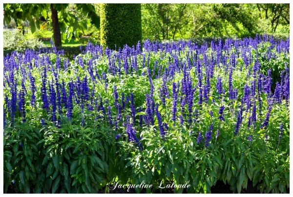 Le jardin bleu, Blue garden