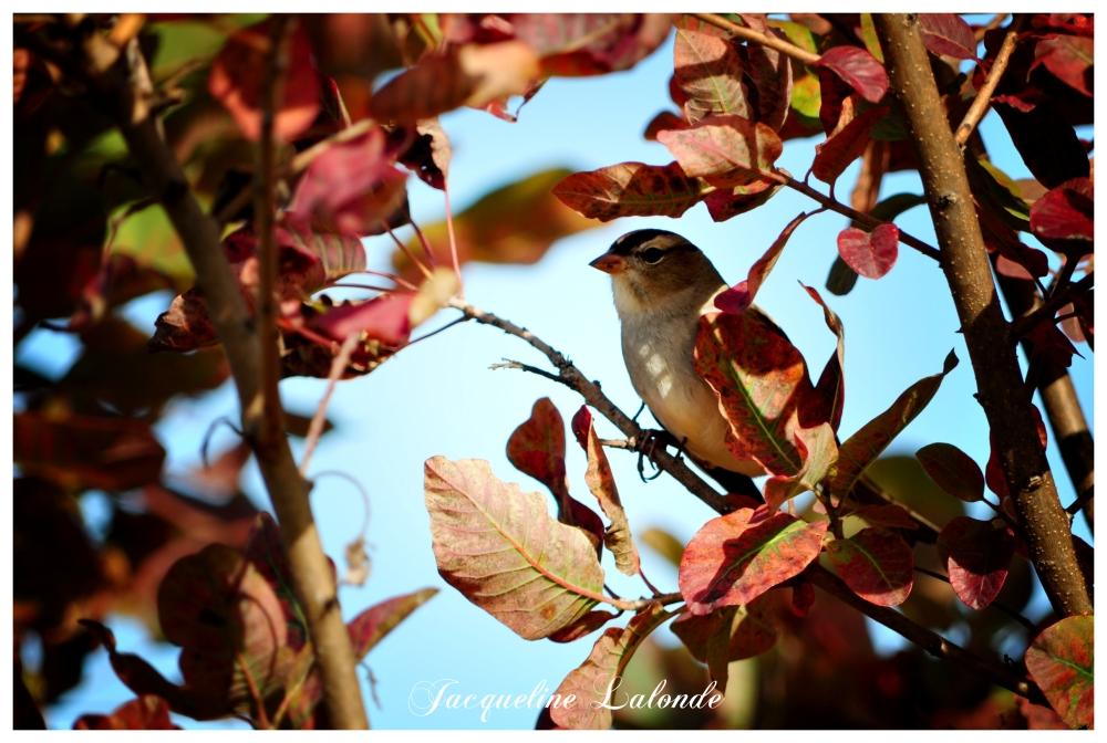 Un oiseau dans l'arbre, A bird in the tree