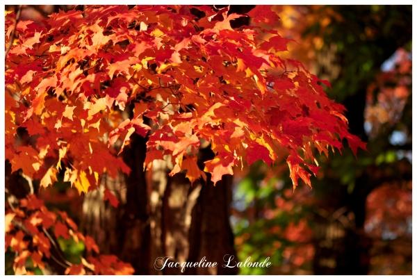 Octobre flamboyant, October flamboyant
