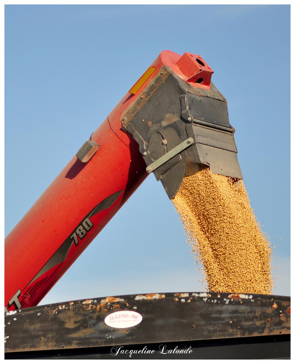 La récolte du soya, Soybean harvest