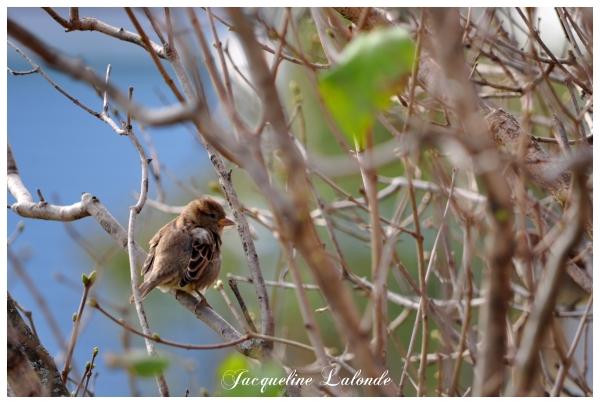 Le petit visiteur, The little visitor