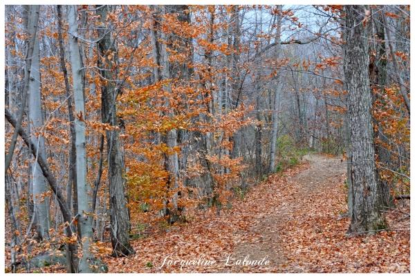 Suivre le sentier, follow the trail