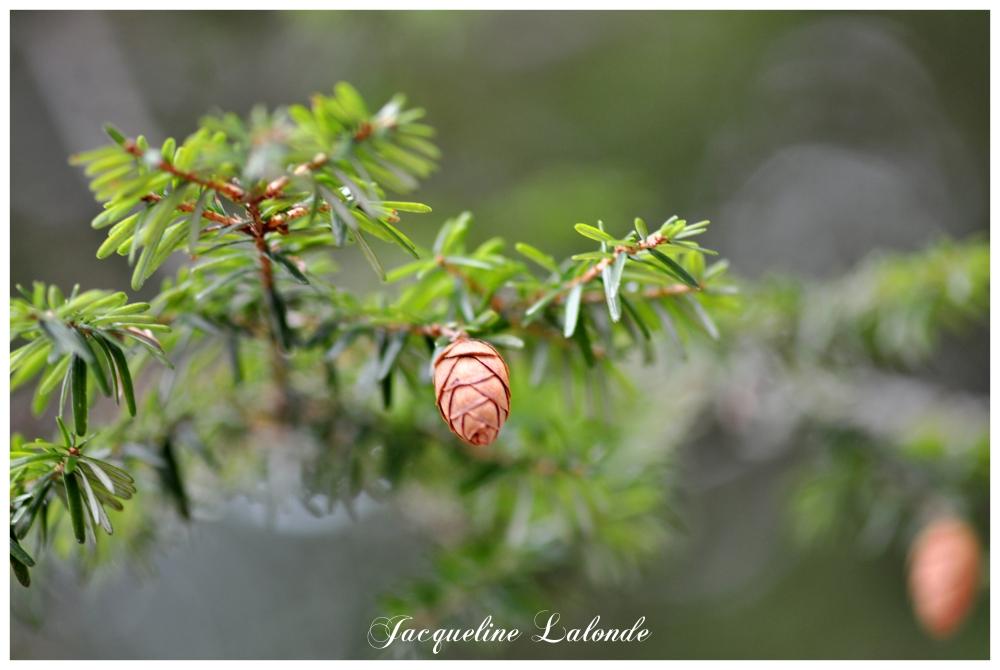Odeur de forêt, Smell of forest