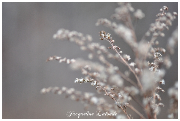Graminées d'automne, autumn grasses