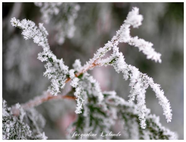 Frimas de décembre, frost in December