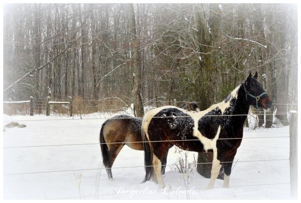 Chevaux dans la neige, Horses in the snow