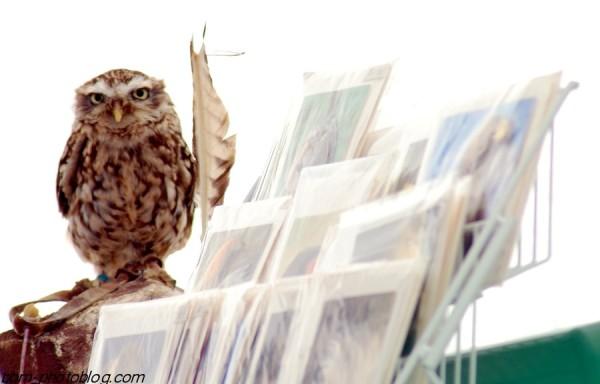 The desktop owl