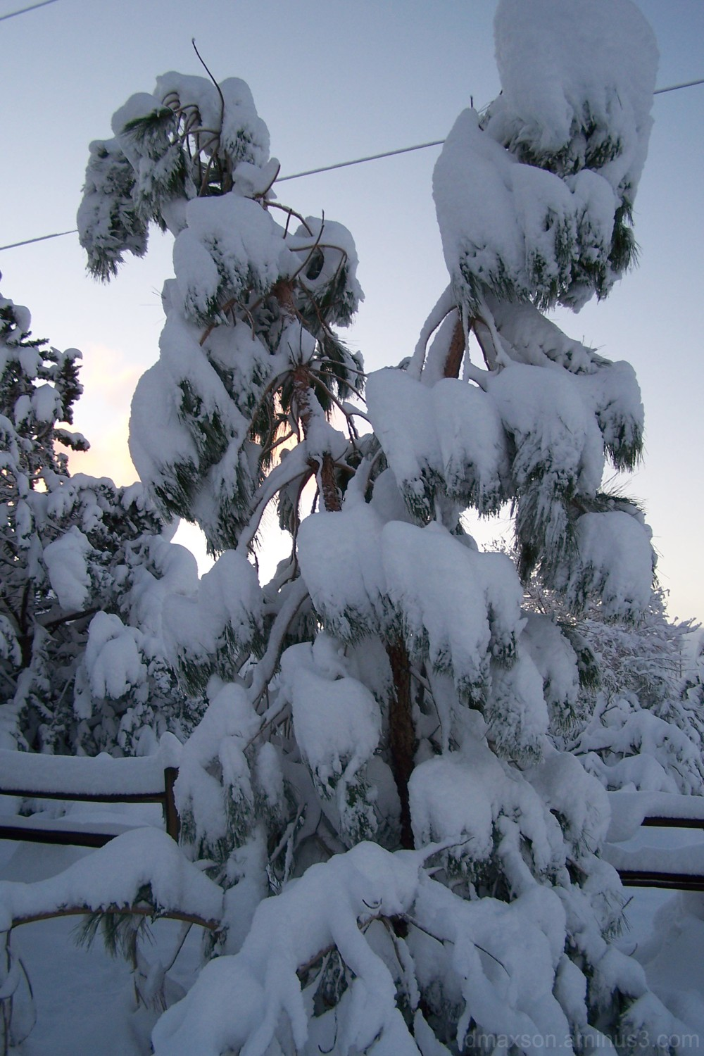 Small pine tree covered in snow