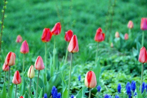 Morning Flower 2