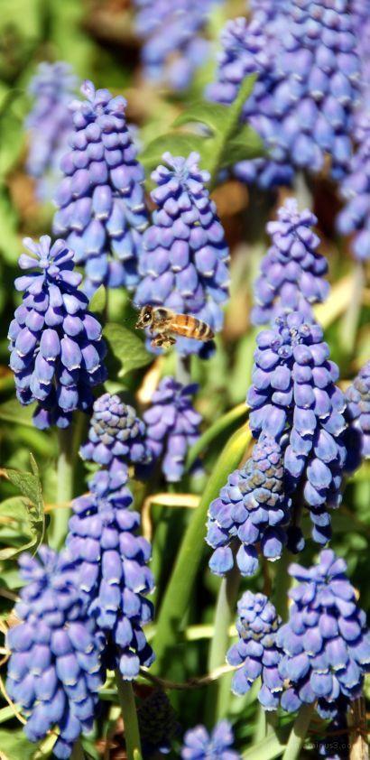 Spring Flower 11