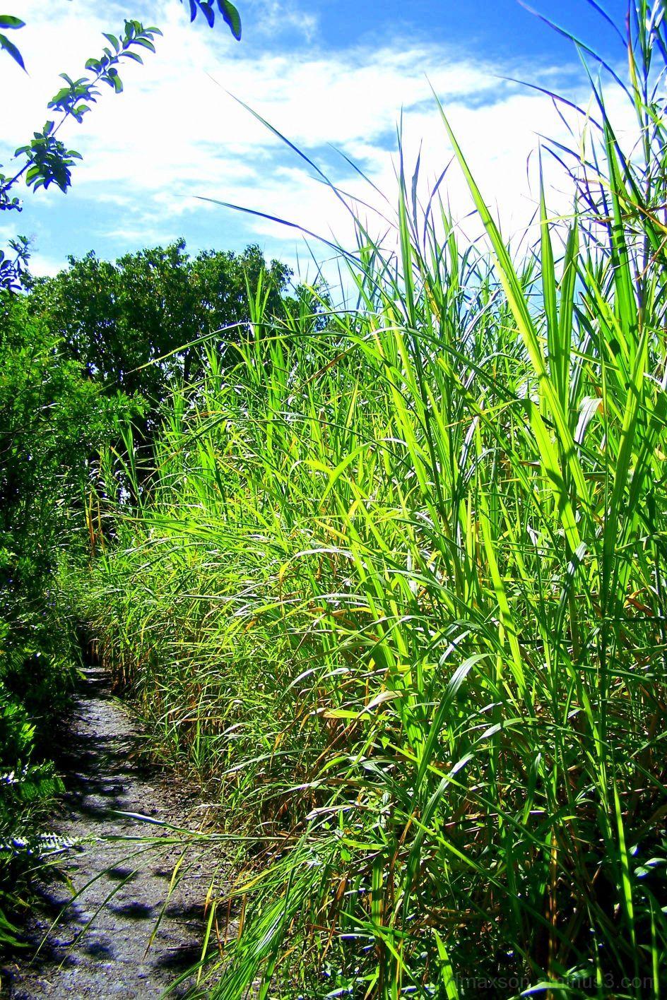 Trail Brush
