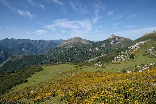 Ponga Asturias
