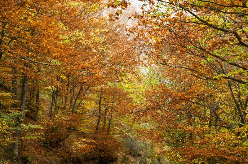 Otoño en el bosque