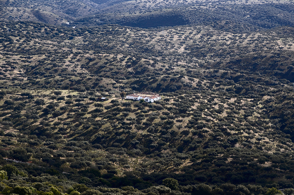Dehesa extremeña. Extramadura's hills