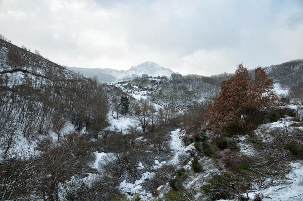 Una escena de invierno. One winter scene