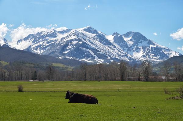 El mundo de las vacas. The world of cows
