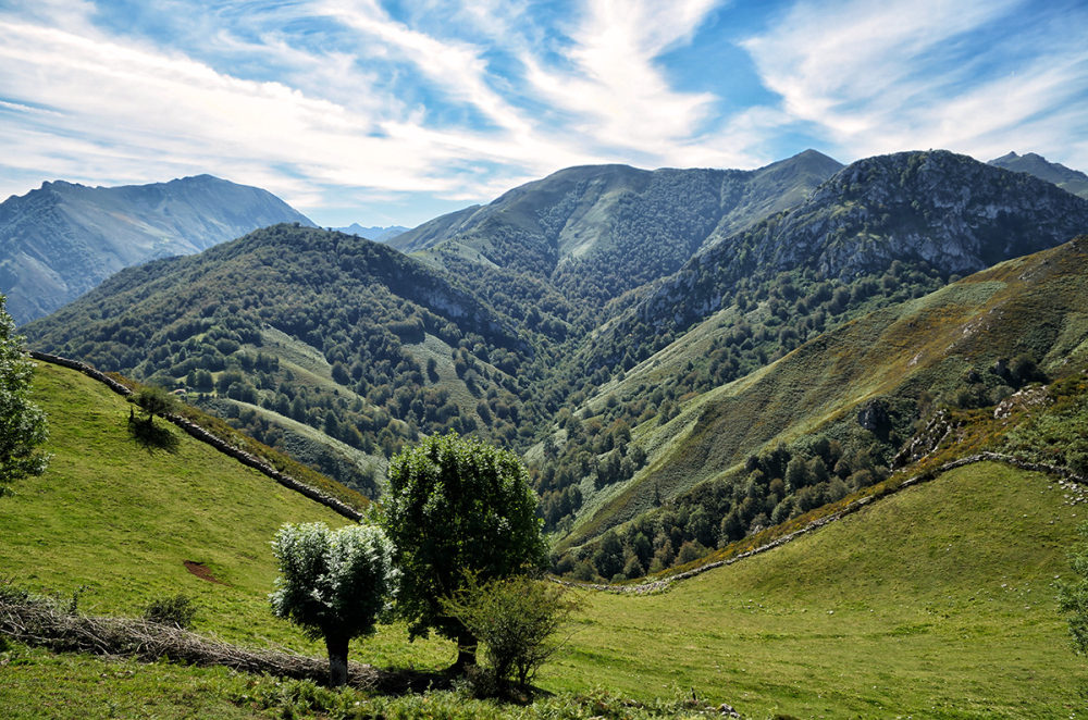 Arboles y valle. Trees and a valley