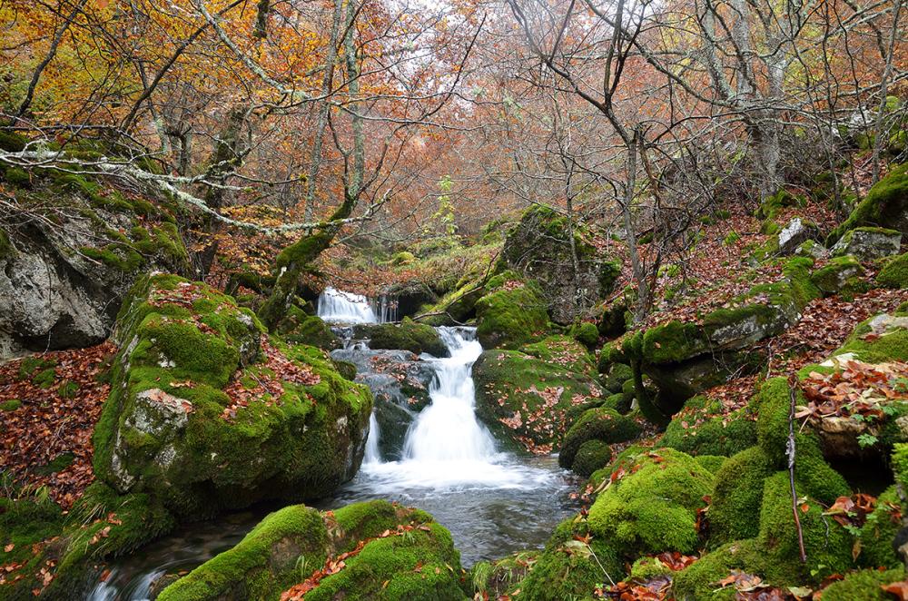 Agua bajo los árboles. Water under the trees. #2