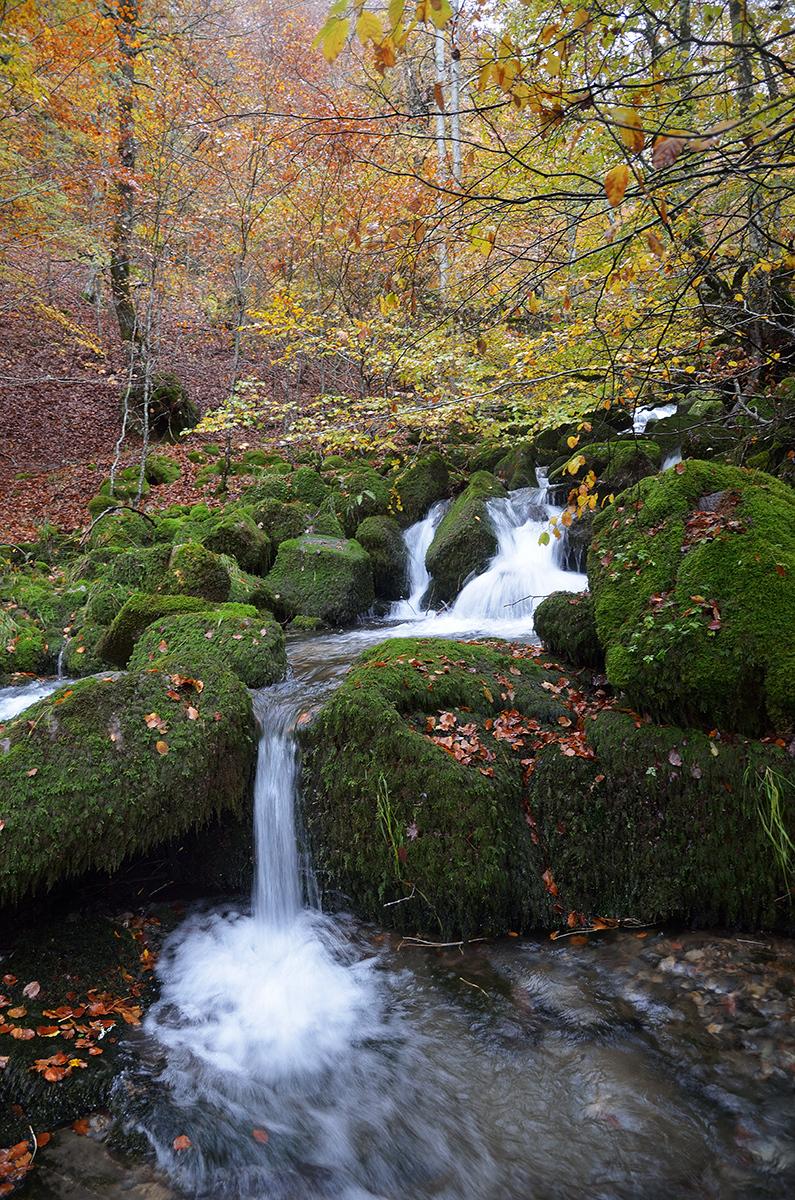 Agua bajo los árboles. Water under the trees. #3