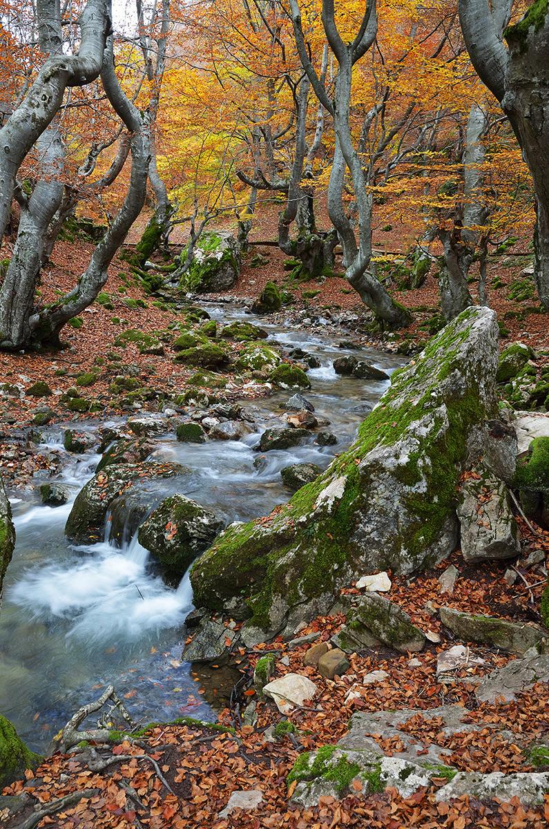 Agua bajo los árboles. Water under the trees. #4