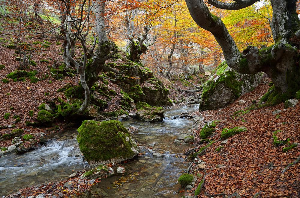 Agua bajo los árboles. Water under the trees. #6