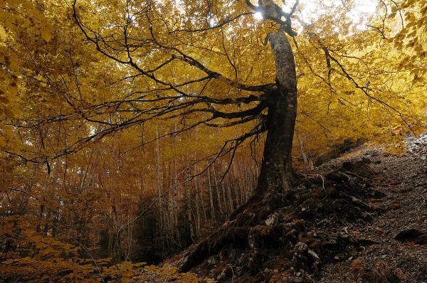 Árbol. Tree