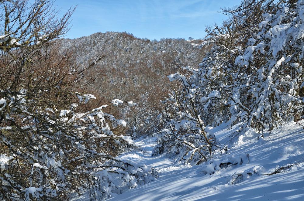 Camino nevado. Snowed path.