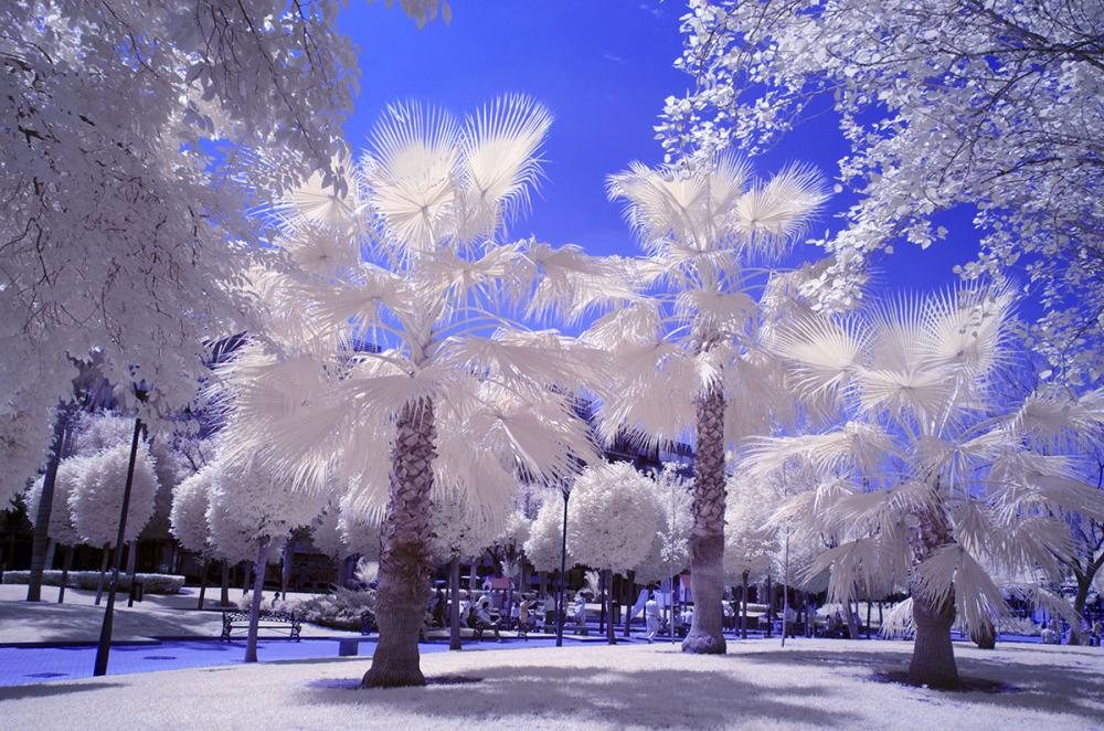 Primavera en infrarrojo. Infrared Spring. #6