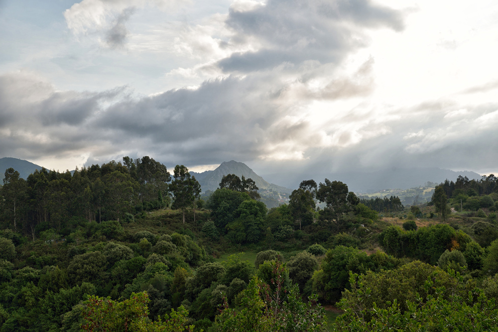 Paisaje. Landscape