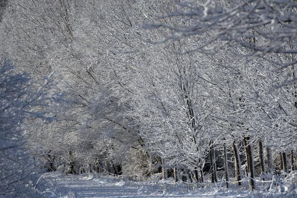 Paseo en la nieve. Wakl in the snow