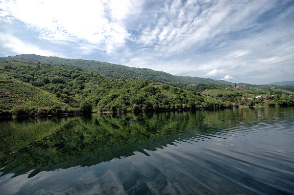Ribera Sacra. Sacred River. #4